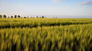Další podvod Proluxu, tentokrát se zemědělskou půdou